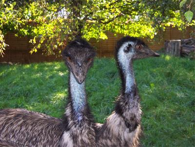 Battersea Park Children's Zoo