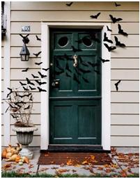 Birds at the front door