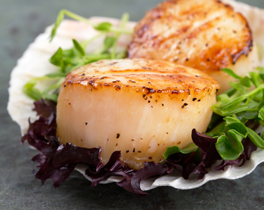 Seared scallops on lettuce