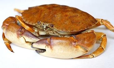 Luxury crab soup
