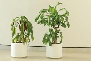 IKEA asked children to compliment a plant for 30 days, what happened next is eye-opening