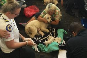 Emergency services rally around dog who gave birth at busy airport