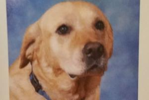 Students put therapy dog in yearbook and were melting