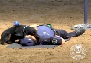 Watch: This adorable little dog has been trained to give CPR