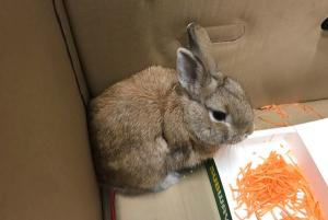 How this fluffy bunny nearly shut a whole airport down