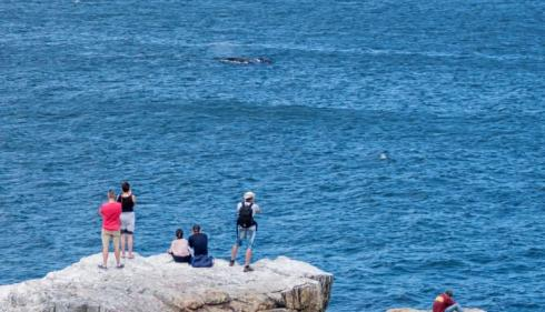 British teen dies after falling from whale watching station in Australia