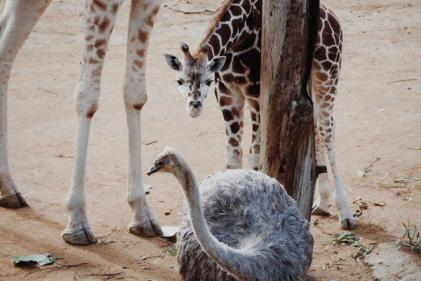 Charity offers single dads and their kids free entry to Edinburgh zoo