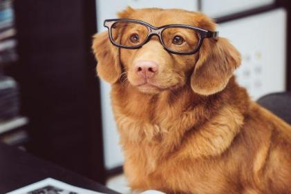Bringing your dog to work has a positive impact on your wellbeing, study finds