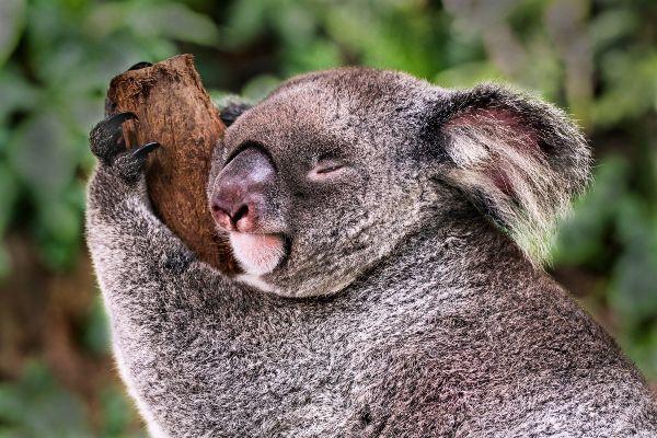 Mama Bear: Every parent has a spirit animal- heres yours
