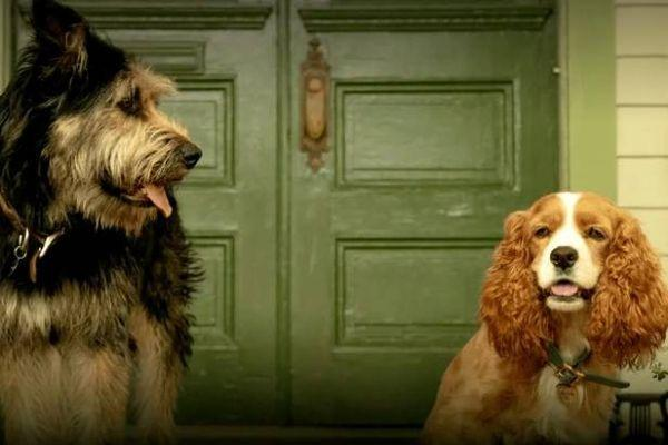 Here's everything we know about the live action remake of Lady and the Tramp
