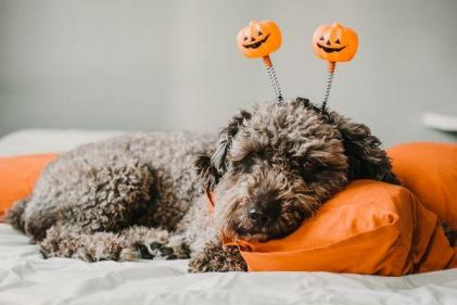 Heres how to keep your dog safe on Halloween night