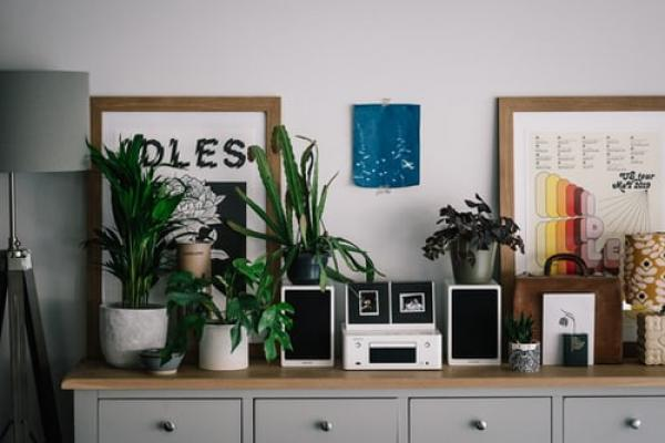Heres why your home office needs a house plant