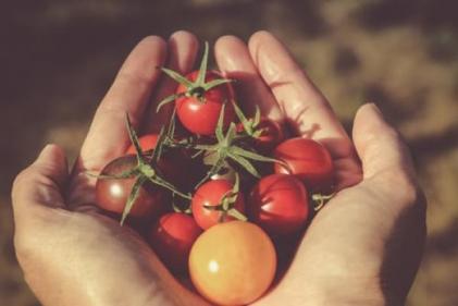 Light summer soup recipes: Fresh tomato, balsamic and basil