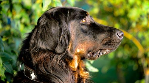 Is your family ready for a pet? These are the signs that you may be!